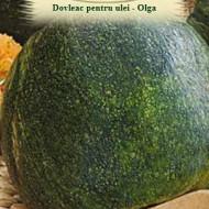 Dovleac Olga (8 seminte), dovleac pentru ulei, continut mare seminte fara coaja, Agrosem