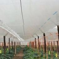 Folie de polietilena pentru protectie termica 6.5m/50mic/(pret pe ml), polietilena de calitate superioara, Sotrafa