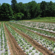 Folie transparenta mulcire legume in sere si solarii latime 6,2m/20mic/rola 530m (13.99Ron/Kg), polietilena de calitate superioara, Vatan Plastik