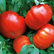 Gigant Rosu BG (150 seminte) tomate gigant soi clasic bulgaresc, carnos si suculent, Agrara