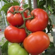 Kessie (CRX 78502) - 500 sem - Seminte de rosii ideale pentru vanzare in stare proaspata cu o timpurietate buna si rezultate remarcabile in sere si solarii de la Cora Seeds