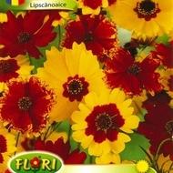Lipscanoaice - Seminte Flori Lipscanoaice Planta Anuala de la Florian