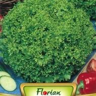 Lollo Bionda - 50 gr - Seminte Salata Lollo Bionda Soi Semitimpuriu Productivitate Mare de la Florian