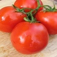 Lugas F1 - 500 sem - Seminte de rosii cu crestere nedeterminata fructe tari si delicioase de la Zki