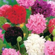 Mac de gradina (1 g), plante decorative cu flori mari, bătute, in culori intense, Horti Tops