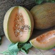 Maestro F1 - 10 sem - Seminte de pepene galben cu un gust extraordinar de bun si o aroma placuta de la Geosemselect