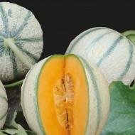 Pepene galben Charentais (50 seminte), pepene galben, pulpa portocalie, zemoasa, aromata, Agrosem