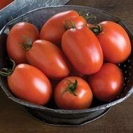 Plum Regal F1 - 1000 sem - Seminte Tomate Determinate pentru camp si spatii deschise de la Bejo