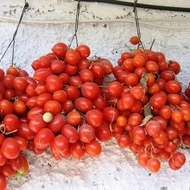 Principe Borghese – 0.7 gr – Seminte Tomate Cherry Extratimpurii Semideterminate