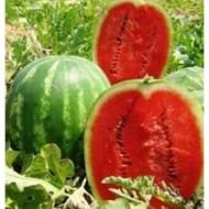 Prismatica F1 - 500 sem - Seminte de pepene verde foarte productiv  uniform culoare atractiva dulce ajungand la o greutate de 18-20 kg de la United Genetics