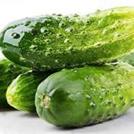 Regina F1 castraveti cornison (40 seminte) hibrid timpuriu foarte productiv, Opal