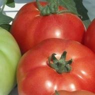 Reyana F1 (50 seminte) tomate cu crestere nedeterminata semitimpurii, Geosem Bulgaria