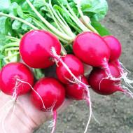 Ridichi de luna Cherry Belle (1 kg), seminte de ridichi de luna fragede, crocante, Agrosem