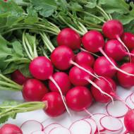 Ridichi de luna Riesenbutter (600 seminte), ridichi mari, rosii, miez crocant, Agrosem