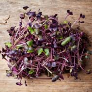 Seminte bio pentru germeni de ridichi (30 g), seminte pentru obtinerea de germeni sau micro-verdeturi de ridichi, Kertimag
