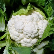 Seminte conopida Raoul F1 (10.000 seminte), calitate excelenta, Hazera