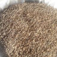 Seminte de soia (1kg), soia de samanta, Agrosem