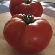 Seminte rosii Azra F1 (500 seminte), determinate, agroTIP