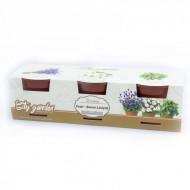 Set de cultivare - Ceai Somn liniștit, Colectia City Garden