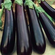 Violetta lunga(400 seminte) de vinete lungi, violet inchis, Prima Sementi