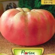 Rosii Gigant Roz - 0.5 gr - Seminte de Tomate Gigant Roz Soi Nedeterminat Semitimpuriu Florian Bulgaira
