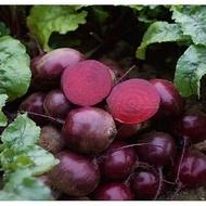 Action F1 - 50.000 sem - Seminte de sfecla rosie ce prezinta toleranta buna la temperaturi scazute cu radacini uniforme netede de culoare bordo de la Bejo