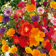 Amestec flori pentru jardiniere (0,75 g), seminte de flori anuale pentru spatii restranse, Agrosem