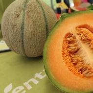 Arapaho F1 - 500 sem - Seminte de pepene galben tip cantalup rotund miez portocaliu gust si aroma excelenta pastrare indelungata de la Syngenta