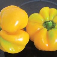 Ardei Topepo Yellow (75 seminte), soi ardei Topepo Galben, fructe tip mar, gust dulce, Agrosem