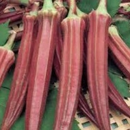 Bame rosii - 5 grame - Seminte de bame rosii soi mediu timpuriu foarte productiv de la Opal