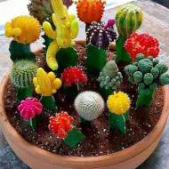 Cactus mix (0.05 g) seminte de cactusi mici, de forme si marimi diferite, Agrosem