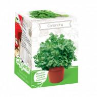 Coriandru - Kit plante aromatice