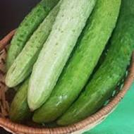 Crocodile castraveti semi-lungi (1 gr), seminte de castravei cu miez fraged si suculent, Opal