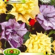 Datura MIX (Trompeta Ingerului) - Seminte Flori Datura de la Florian