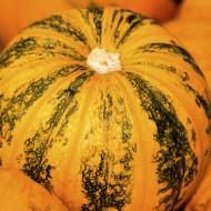 Dovleac Round America (8.000 seminte), seminte dovleac de copt, pulpa galbena, densa, gustoasa, Agrosem