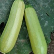 Dovlecel Radu (42 seminte), dovlecei verde deschis, miez zemos, Agrosem
