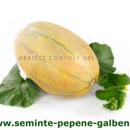 Kehlibar F1 (100 gr) seminte de pepene galben, bulgaresti profesionale, Agrotop Bulgaria