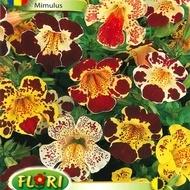 Mimulus - Seminte Flori Mimulus Planta Anuala de la Florian