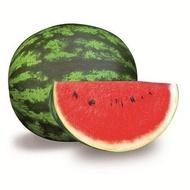Oneida F1 - 1000 sem - Seminte de pepene verde extratimpuriu pentru camp tip Crimson Sweet de la Rijk Zwaan