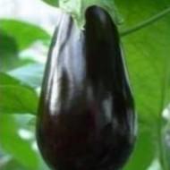 Onyx F1 - 250 sem - Seminte de vinete cu fructe usor alungite de culoare negru inchis si lucios ce se remarca printr-o legare excelenta si o vigoare foarte buna avand o productivitate foarte ridicata de la Fito Semillas