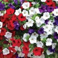 Petunie curgatoare mix (250 seminte), seminte flori petunii curgatoare mix de la Agrosel