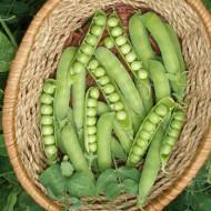 RAN 1 mazare de gradina (25 kg), seminte de mazare soi extratimpuriu foarte productiv, Florian