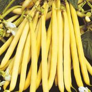 Rocquencourt (200 gr) seminte de fasole pitica galbena fideluta, adaptabilitate excelenta, Agrosem