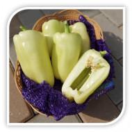 Seminte ardei Eliza F1 (AX 9505 F1) (500 seminte), ardei gras galben, agro TIP