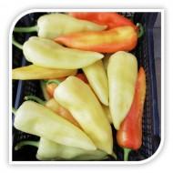 Seminte ardei gras Albus F1 (100 seminte), aspect comercial, agroTIP