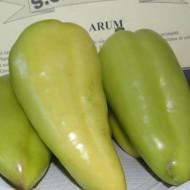 Seminte ardei gras Arum (750 seminte), soi timpuriu de culoare verde la maturitate, SCDL Buzau