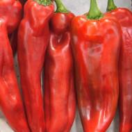 Seminte ardei lung Dulce Italiano (0.5 gr), Agrosem