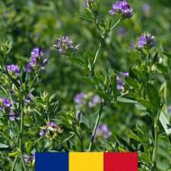 Seminte lucerna Valahia 4AG08 (10 kg), soi romanesc rezistent la seceta, continut ridicat de proteine, 4 Agro
