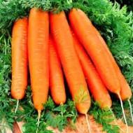 Seminte morcovi Youcon F1 (100.000 seminte), timpuriu, Syngenta