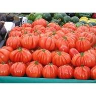Seminte rosii Arawak F1 (500 seminte), crestere nedeterminata semitimpurii, Syngenta